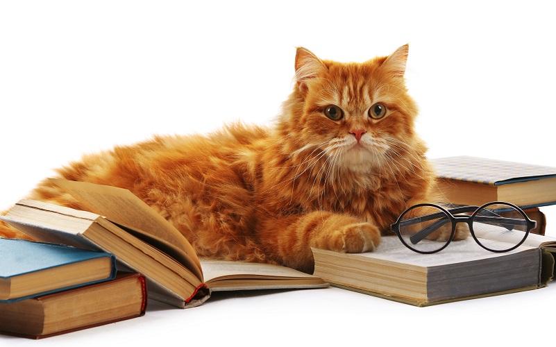 Orange cat with glasses